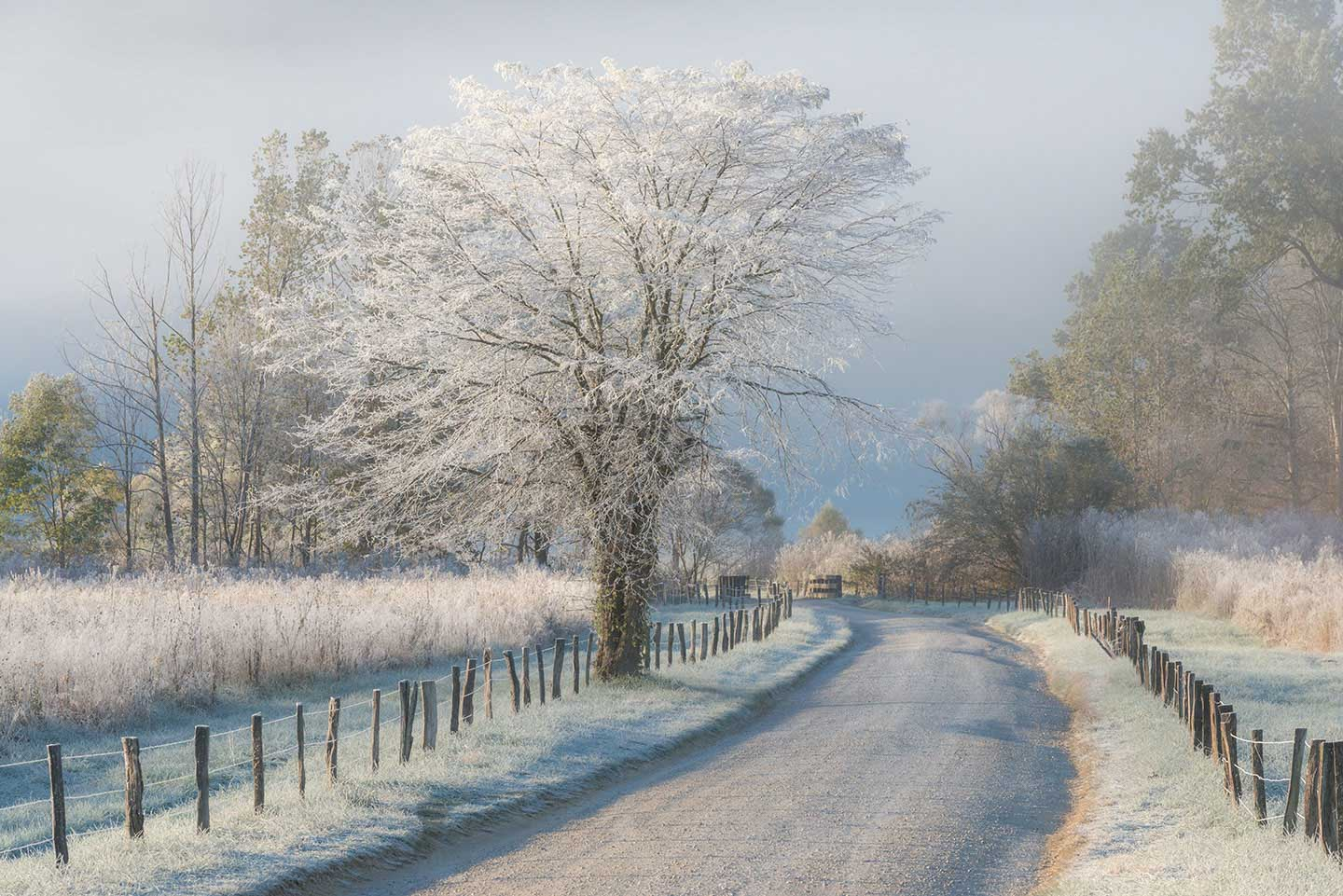 A Frosty Morning Limited Edition Print