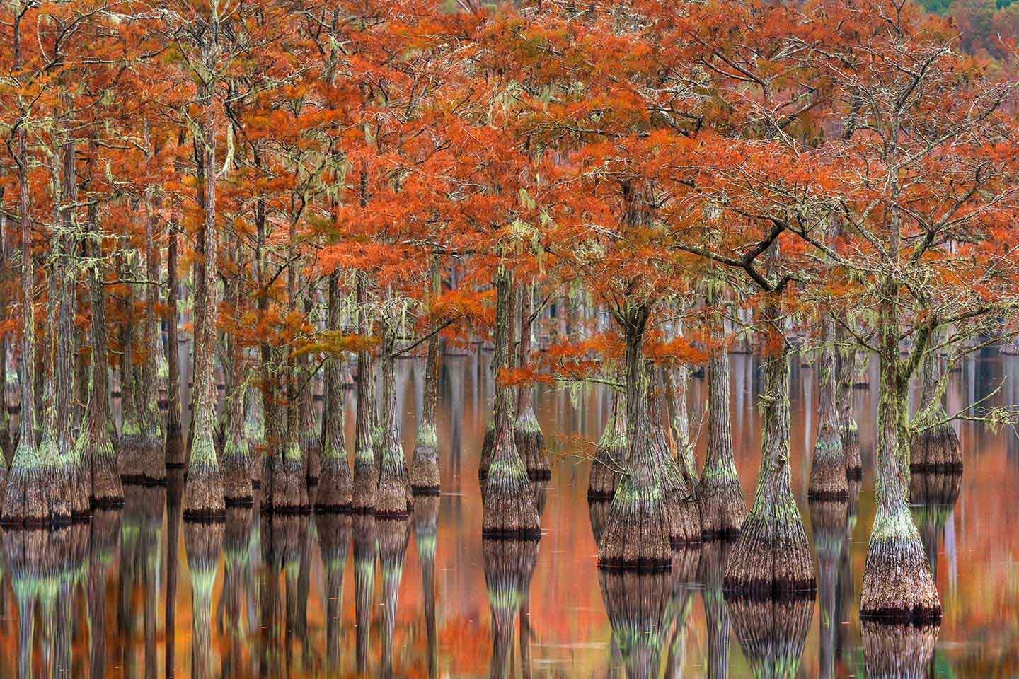 Cypress Garden Limited Edition Print