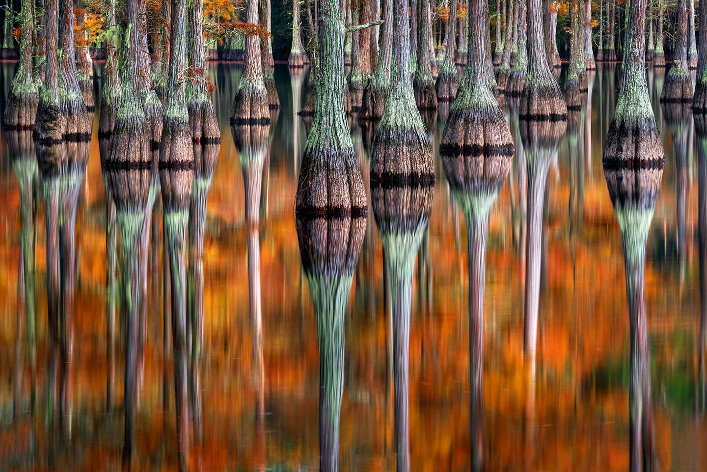 Cypress Reflections Limited Edition Print